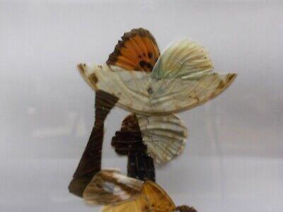 Curiosité Tableau en marqueterie d'ailes de papillons représentant une femme 2