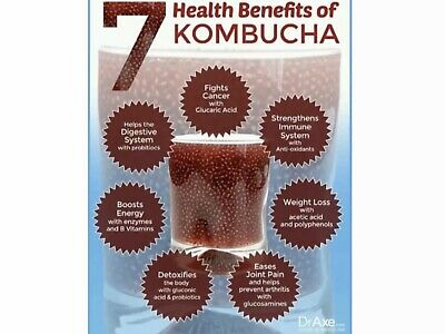 Kombucha Scoby + Printed Instruct's+starter, 100g Inc Packaging. 3