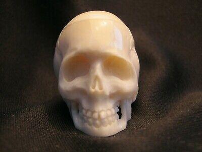 Unusual Hand Carved Anatomically Accurate Skull Memento Mori In Buffalo Bone 5