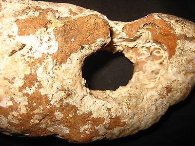 Antique Authentic Terracota Roman Fishing Weight 1/vi Ad V. Rare 4