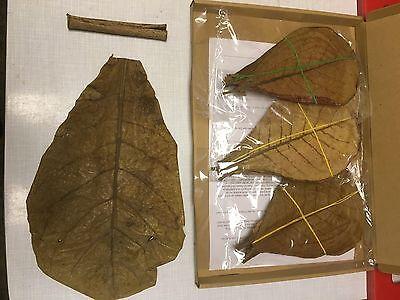 KOMBISET 30 Seemandelbaumblätter 15-20cm & 1 Röhre Seemandelbaumrinde & 1 Riese 3