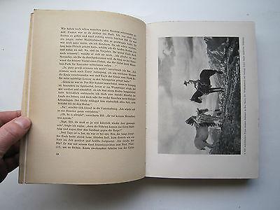 """""""Auf Bergwild in den Rocky Mountains""""Jagderlebnisse von Messany,1941 6"""
