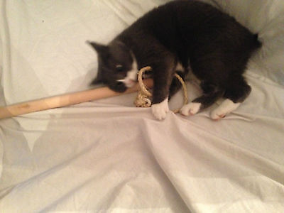 Rope and stick cat toy with catnip