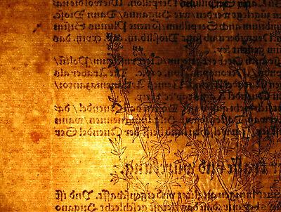 Apothekerkräuter QUENDEL Thymian Orig. Holzstich auf Textblatt 1590 Heilkräuter 3