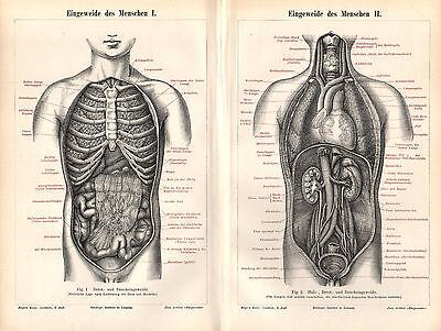 Eingeweide des Menschen Stich 1896 Tafeln I - V Anatomie Lunge Herz Niere Darm 2