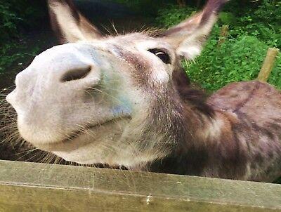5* luxury Devon Holiday Barn, Log burner Cornish sandy beaches & Dartmoor 25 min 3
