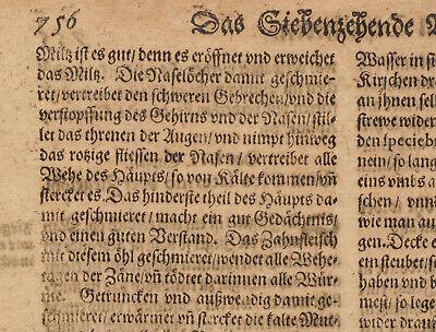 KORALLEN Öl  Apotheker Medizin Original Doppelblatt 1620 Arznei Heilmittel Arzt 4