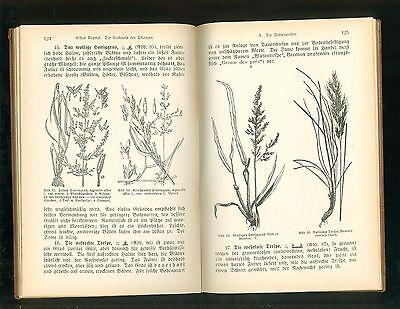 Rationeller Futterbau 1926 Praktische Anleitung Landwirte Lehranstalten 4