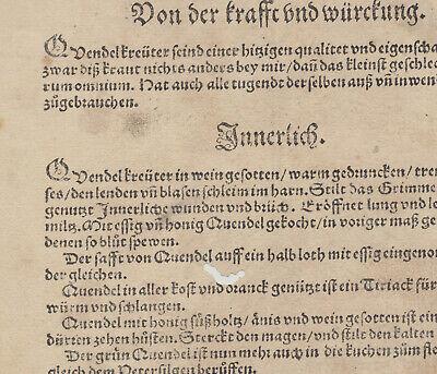 Apothekerkräuter QUENDEL Thymian Orig. Holzstich auf Textblatt 1590 Heilkräuter 6