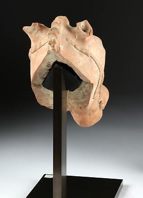 Greek Hellenistic Terracotta Head of Horse Lot 22C