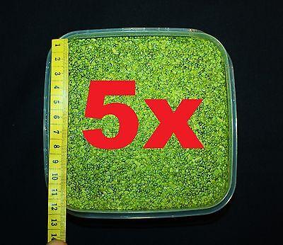 **WASSERLINSEN** 500qcm Lemna Schwimmpflanze Algenkiller Aquarienpflanze Teich 2