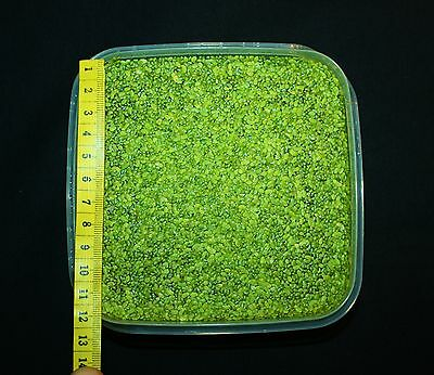 **WASSERLINSEN** 10x10cm Lemna Schwimmpflanze Algenkiller Aquarienpflanze Teich