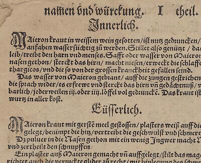 OREGANO Dost WOLGEMUT Apothekerkräuter Original Textblatt um 1590 Küchenkräuter 6
