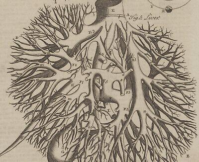 LEBER Galle Original Kupferstich 1790 Medizinstudium Blut Arzt Anatomie Medizin 4