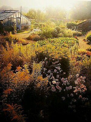 HEIRLOOM Vegetable & Herb Seeds Autumn Winter, 15 Individual Packs