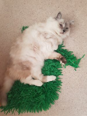 Tissue Paper Grass Mat for cat or kitten toy UK FAST DELIVERY pet toys. 9