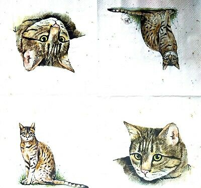 4 Lunch Paper Napkins for Decoupage Party Table Craft Vintage Funny Cats