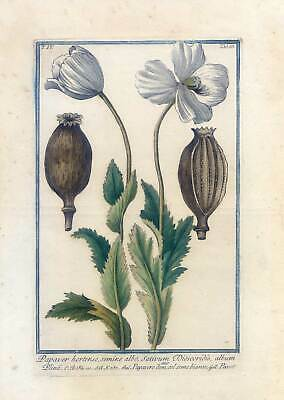 Mohn, Papaver, Bume, Kupferstich G. Bonelli, Hortus Romanus 1772-93 4