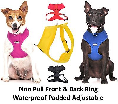 Warning Alert Dog Collar Lead Harness Coat! Award Winning Pet Product! Why Wait? 12