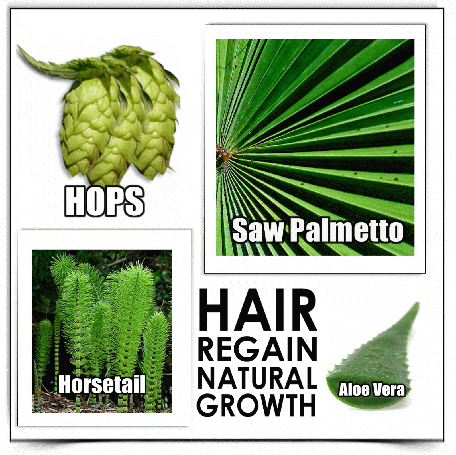 will saw palmetto stop hair loss