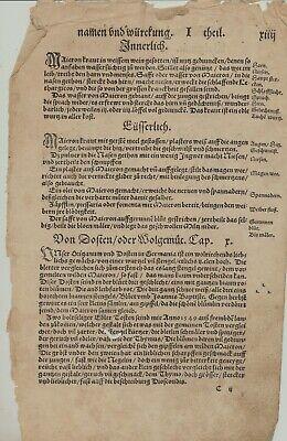 OREGANO Dost WOLGEMUT Apothekerkräuter Original Textblatt um 1590 Küchenkräuter 2
