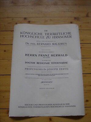 Unikat XXL Urkunde 1914 Königliche Tierärztliche Hochschule zu Hannover VINTAGE