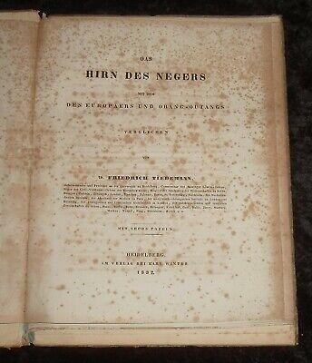 Das Hirn des Negers ,Original von 1837 , Friedrich Tiedemann 8