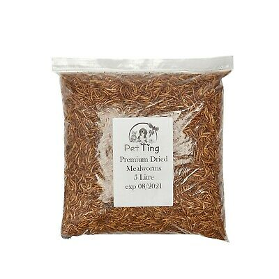 Dried Mealworms Premium Wild Bird Food Large Worms Snacks Natural 3