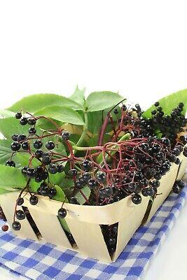 Elderberry Dried Fruit ( Sambucus Nigra ) - Health Embassy 8