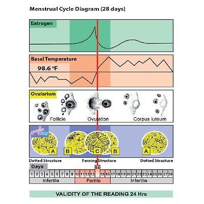 Fertility Saliva Test Mini-Microscope 10 Ovulation Tests 10 Pregnancy Strips 5