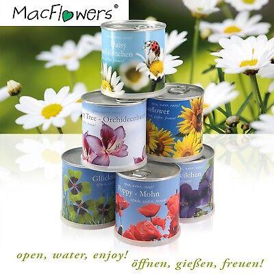 Erdbeere / Strawberry - Blumen in der Dose von MacFlowers