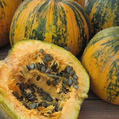 Seeds Pumpkin Golosemjanaja Giant Vegetable Organic Heirloom Russian Ukraine