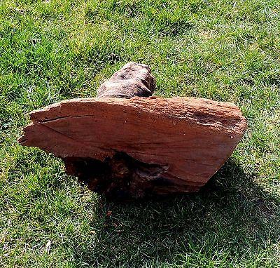 Mangroven Wurzel Sehr groß 46cm x 30cm x 26cm #10 (Aquarium Fische Dekoration) 4