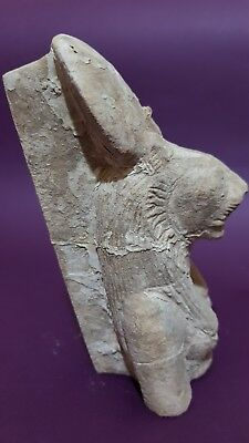 ANCIENT EGYPTIAN ANTIQUES Half STATUE Of GODDESS SEKHMET EGYPT Luxor STONE BC 6