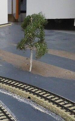 3 Birken, 120 mm hoch in Premium Qualität, jeder Baum ist ein Unikat 7