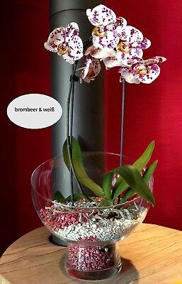 Set aus 2 Clips+1 l Orchideengranulat fein gelb Colomi 4-8 mm 10,99 EUR//l