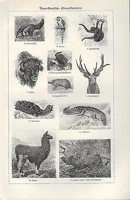 Lithografie 1924, Amerikanische Kultur. Völker. Charakter-Tiere. U.S.A. Kunst 3