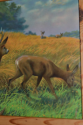 OLD BLACK FOREST HUNTING PICTURE ROEBUCK DEER LITHOGRAPH GERMANY c1890 2