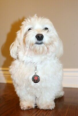 ALL ACCESS CANINE™ Service Dog Emotional Support Animal ESA Metal Dog Collar Tag 5