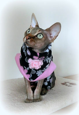 Comfy cat top for a Sphynx cat clothes for Sfinks Katze, cat clothes 2