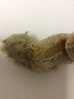 Vintage Steiff Squirrel Plush No Tag No ID Hard To Find! 7