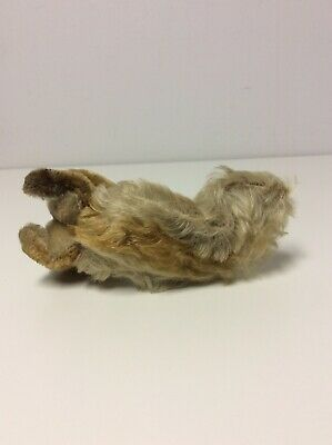 Vintage Steiff Squirrel Plush No Tag No ID Hard To Find! 6
