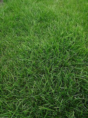 Graines Pelouse Sac 5kg Semences Gazon Graminées Herbe Verte Haute Qualité Neuf 5