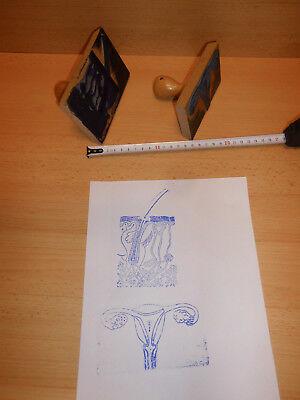 2 Stempel /Biologie/ Haut, Eierstock, gebraucht (4)