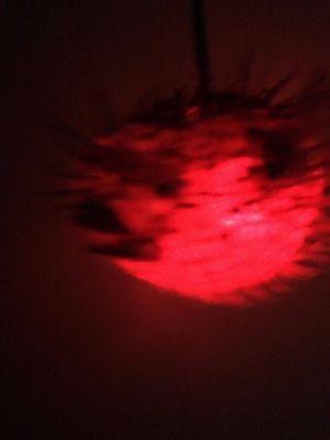 "NEW 8""-9"" Puffer Fish Lamp w/color changing LED Light Tiki bar Smokin Tikis fx 4"