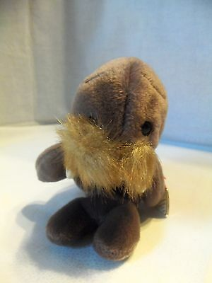TY Beanie Babies Walrus ** JOLLY ** 5th Generation New w/ Tag