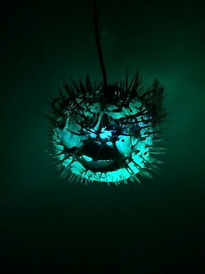 "NEW 7""- 8"" Puffer Fish Lamp w/color changing LED Light Tiki bar Smokin Tikis 21 3"