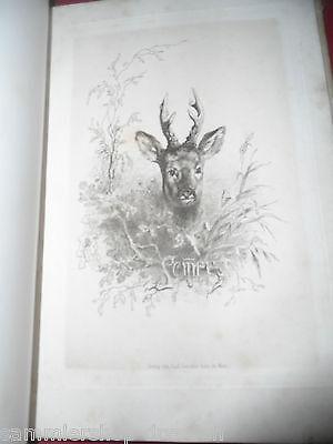 Dombrowki Aus dem Tagebuche eines Wildtöters für Freunde des Waidwerkes EA 1878 3