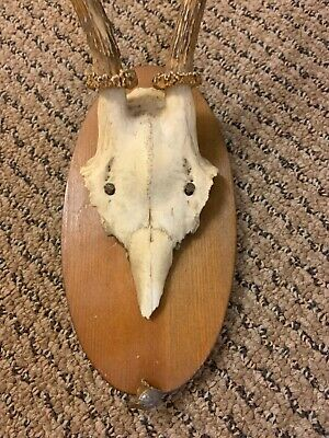 Black forest wooden plate antlers taxidermy with bullet hunter date Revier 2