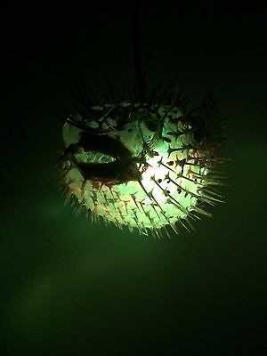 "NEW 7""- 8"" Puffer Fish Lamp w/color changing LED Light Tiki bar Smokin Tikis 21 7"